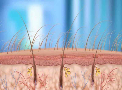 hair loss treatment hair follicle